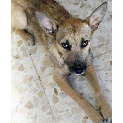 Maxcotea | Foto de Cloe - Perro, Raza: Otro | Maxcotea, Adopción de mascotas. Adopción de perros. Adopción de gatos.