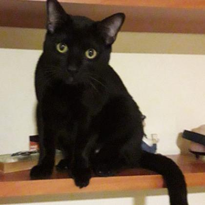 Maxcotea | Foto de Gurumelo - Gato, Raza: Otro | Maxcotea, Adopción de mascotas. Adopción de perros. Adopción de gatos.