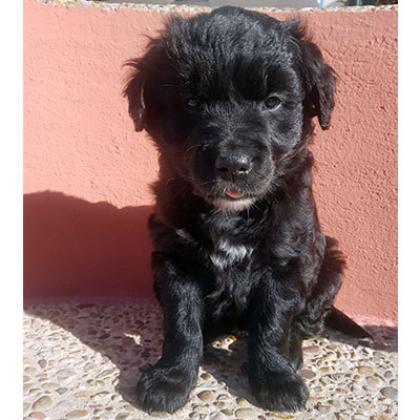 Maxcotea | Foto de Kalia - Perro, Raza: Otro | Maxcotea, Adopción de mascotas. Adopción de perros. Adopción de gatos.