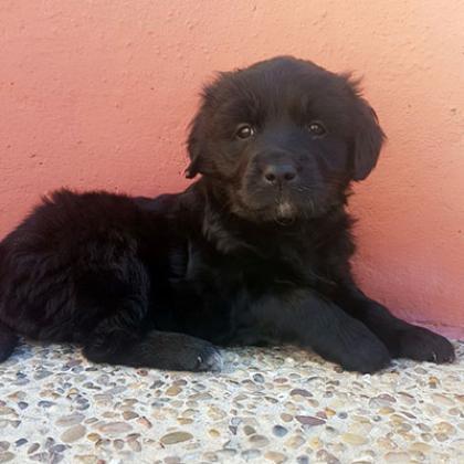 Maxcotea | Foto de Asha - Perro, Raza: Otro | Maxcotea, Adopción de mascotas. Adopción de perros. Adopción de gatos.