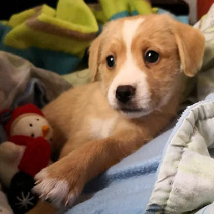 Maxcotea | Foto de Bod - Perro, Raza: Otro | Maxcotea, Adopción de mascotas. Adopción de perros. Adopción de gatos.