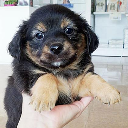 Maxcotea | Foto de Pinto - Perro, Raza: Otro | Maxcotea, Adopción de mascotas. Adopción de perros. Adopción de gatos.