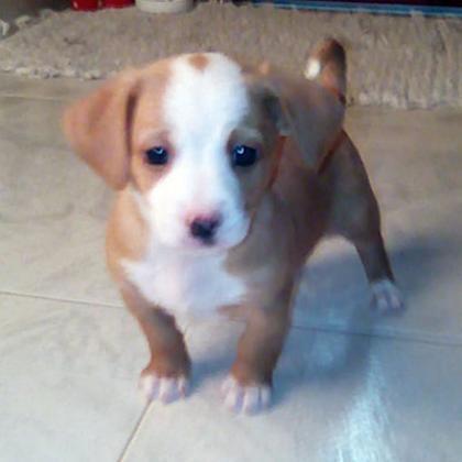 Maxcotea | Foto de Terry - Perro, Raza: Otro | Maxcotea, Adopción de mascotas. Adopción de perros. Adopción de gatos.