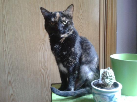 Maxcotea | Foto de Bebé - Gato, Raza: Gato común europeo | Maxcotea, Adopción de mascotas. Adopción de perros. Adopción de gatos.