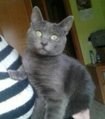 Maxcotea | Foto de Dori - Gato, Raza: Gato común europeo | Maxcotea, Adopción de mascotas. Adopción de perros. Adopción de gatos.