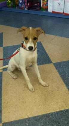 Maxcotea | Foto de HOOK - Perro, Raza: Otro | Maxcotea, Adopción de mascotas. Adopción de perros. Adopción de gatos.