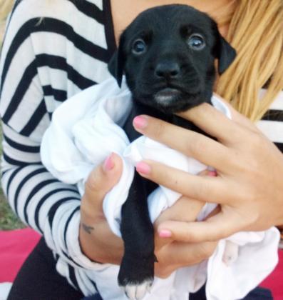 Maxcotea | Foto de Balu - Perro, Raza: Otro | Maxcotea, Adopción de mascotas. Adopción de perros. Adopción de gatos.