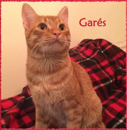 Maxcotea | Foto de Garés - Gato, Raza: Gato común europeo | Maxcotea, Adopción de mascotas. Adopción de perros. Adopción de gatos.
