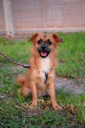 Maxcotea | Foto de PIMIENTA - Perro, Raza: Otro | Maxcotea, Adopción de mascotas. Adopción de perros. Adopción de gatos.