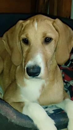 Maxcotea | Foto de GIORGIO - Perro, Raza: Otro | Maxcotea, Adopción de mascotas. Adopción de perros. Adopción de gatos.