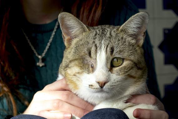 Maxcotea   Foto de Kike - Gato, Raza: Gato común europeo   Maxcotea, Adopción de mascotas. Adopción de perros. Adopción de gatos.