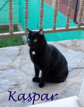 Maxcotea | Foto de Kaspar - Gato, Raza: Gato común europeo | Maxcotea, Adopción de mascotas. Adopción de perros. Adopción de gatos.