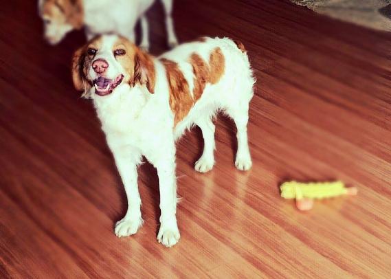 Maxcotea | Foto de COCO - Perro, Raza: Otro | Maxcotea, Adopción de mascotas. Adopción de perros. Adopción de gatos.