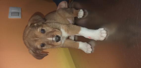 Maxcotea | Foto de Buñuelo - Perro, Raza: Otro | Maxcotea, Adopción de mascotas. Adopción de perros. Adopción de gatos.