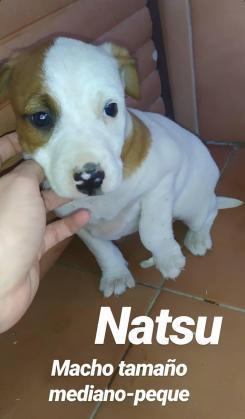 Maxcotea | Foto de Natsu - Perro, Raza: Otro | Maxcotea, Adopción de mascotas. Adopción de perros. Adopción de gatos.