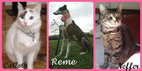 Maxcotea | Foto de Carlota,NefferADOPTADAS y Reme  - Otro, Raza: Otro | Carlota,Neffer y Reme en adopción | Maxcotea, Adopción de mascotas. Adopción de perros. Adopción de gatos.