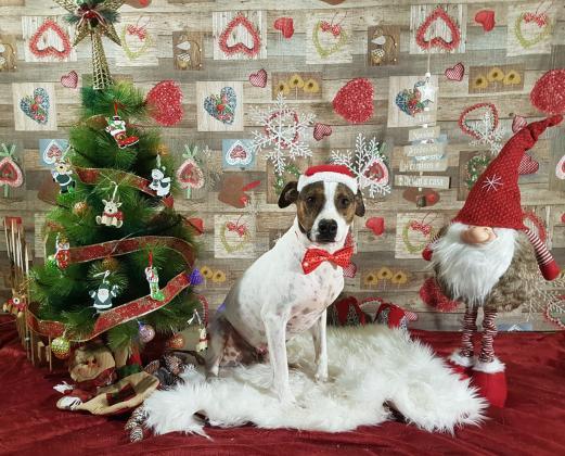 Maxcotea | Foto de bobi - Perro, Raza: Otro | Navidad | Maxcotea, Adopción de mascotas. Adopción de perros. Adopción de gatos.
