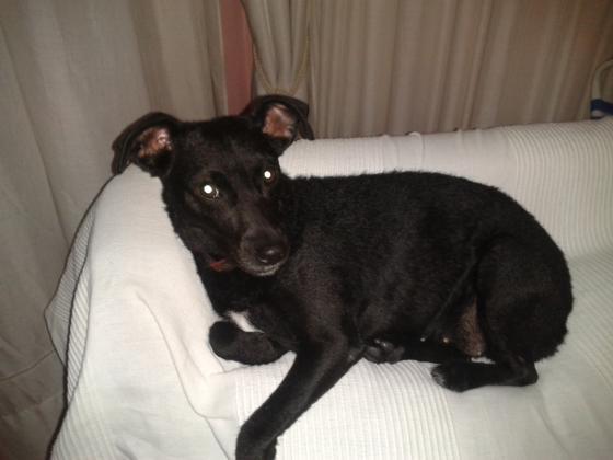 Maxcotea | Foto de Luna - Perro, Raza: Otro | Maxcotea, Adopción de mascotas. Adopción de perros. Adopción de gatos.