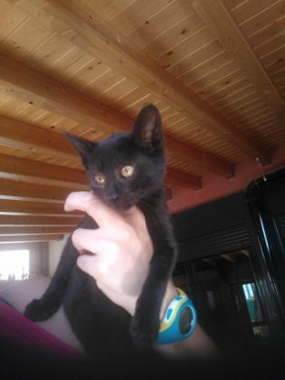 Maxcotea | Foto de Gatitos en adopción - Gato, Raza: Otro | Maxcotea, Adopción de mascotas. Adopción de perros. Adopción de gatos.
