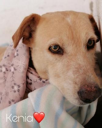 Maxcotea | Foto de Kenia - Perro, Raza: Affenpinscher | Kenia | Maxcotea, Adopción de mascotas. Adopción de perros. Adopción de gatos.