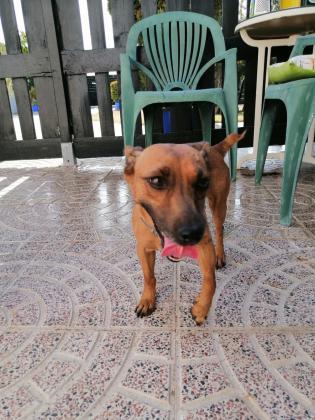 Maxcotea | Foto de Susi - Perro, Raza: Otro | Maxcotea, Adopción de mascotas. Adopción de perros. Adopción de gatos.