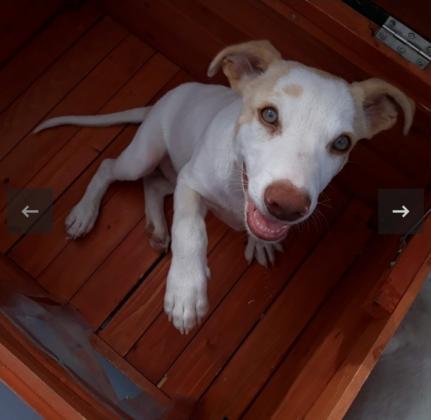 Maxcotea | Foto de Remy - Perro, Raza: Otro | Remy.  | Maxcotea, Adopción de mascotas. Adopción de perros. Adopción de gatos.