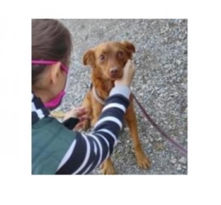 Maxcotea | Foto de Hiisi - Perro, Raza: Otro | Hiisi | Maxcotea, Adopción de mascotas. Adopción de perros. Adopción de gatos.