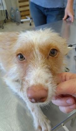 Maxcotea | Foto de Amina - Perro, Raza: Otro | Amina | Maxcotea, Adopción de mascotas. Adopción de perros. Adopción de gatos.