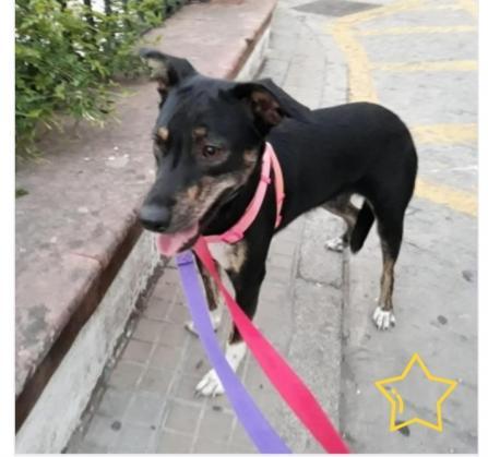 Maxcotea | Foto de Malena - Perro, Raza: Otro | Maxcotea, Adopción de mascotas. Adopción de perros. Adopción de gatos.