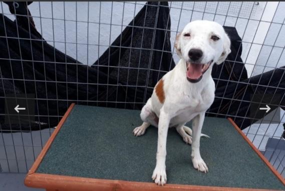 Maxcotea | Foto de Mirta - Perro, Raza: Otro | Maxcotea, Adopción de mascotas. Adopción de perros. Adopción de gatos.