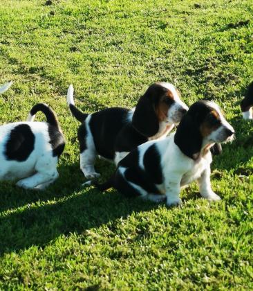 Maxcotea | Foto del maxcotero justine | Maxcotea, Adopción de mascotas. Adopción de perros. Adopción de gatos.