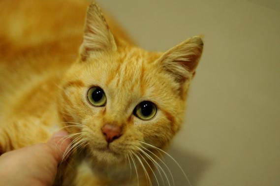 Maxcotea | Foto de YIN EN ADOPCION - Gato, Raza: Otro | Maxcotea, Adopción de mascotas. Adopción de perros. Adopción de gatos.