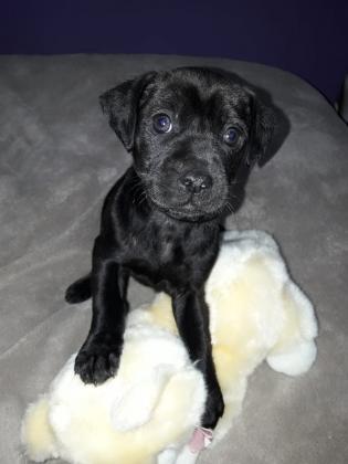 Maxcotea | Foto de OSCAR - Perro, Raza: Otro | Maxcotea, Adopción de mascotas. Adopción de perros. Adopción de gatos.