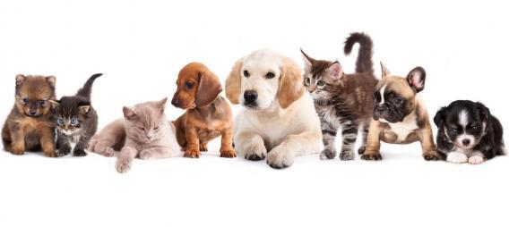 Maxcotea | Foto del maxcotero yvetteperez | Maxcotea, Adopción de mascotas. Adopción de perros. Adopción de gatos.