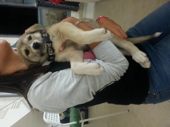 Maxcotea | Foto de Zar - Perro, Raza: Labrador Retriever | Maxcotea, Adopción de mascotas. Adopción de perros. Adopción de gatos.