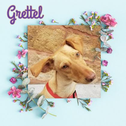 Maxcotea | Foto de Grettel - Perro, Raza: Otro | Grettel | Maxcotea, Adopción de mascotas. Adopción de perros. Adopción de gatos.