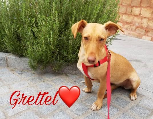 Maxcotea | Foto de Grettel - Perro, Raza: Otro | Maxcotea, Adopción de mascotas. Adopción de perros. Adopción de gatos.