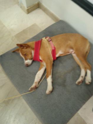 Maxcotea   Foto de Scooby - Perro, Raza: Affenpinscher   Scooby   Maxcotea, Adopción de mascotas. Adopción de perros. Adopción de gatos.