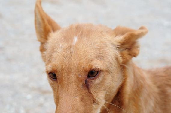 Maxcotea | Foto de THOR EN ADOPCION - Perro, Raza: Otro | Maxcotea, Adopción de mascotas. Adopción de perros. Adopción de gatos.