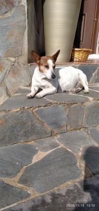 Maxcotea | Foto de Devra - Perro, Raza: Otro | Maxcotea, Adopción de mascotas. Adopción de perros. Adopción de gatos.