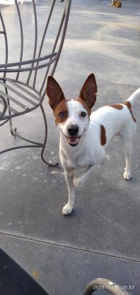 Maxcotea | Foto de Troy - Perro, Raza: Affenpinscher | Maxcotea, Adopción de mascotas. Adopción de perros. Adopción de gatos.