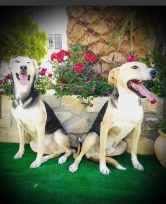 Maxcotea | Foto de Bandolero y Bandido - Perro, Raza: Otro | Maxcotea, Adopción de mascotas. Adopción de perros. Adopción de gatos.