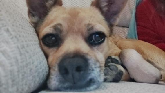 Maxcotea | Foto de Curro - Perro, Raza: Otro | Maxcotea, Adopción de mascotas. Adopción de perros. Adopción de gatos.