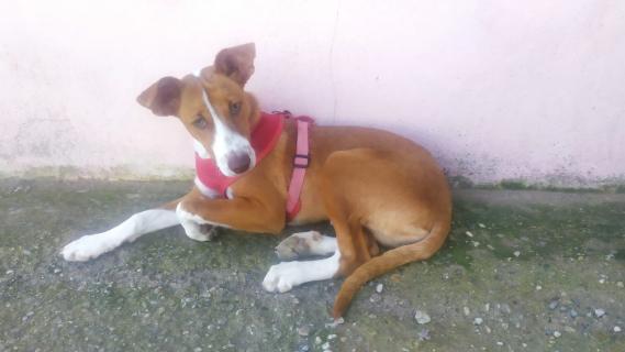 Maxcotea | Foto de Scooby - Perro, Raza: Affenpinscher | Maxcotea, Adopción de mascotas. Adopción de perros. Adopción de gatos.