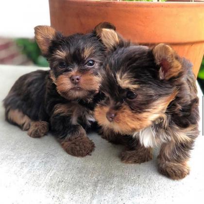 Maxcotea | Foto del maxcotero lakeman | Maxcotea, Adopción de mascotas. Adopción de perros. Adopción de gatos.