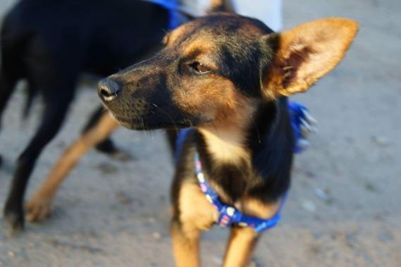 Maxcotea | Foto de Lea - Perro, Raza: Otro | Fotos de Lea | Maxcotea, Adopción de mascotas. Adopción de perros. Adopción de gatos.