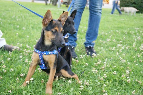 Maxcotea | Foto de Lea - Perro, Raza: Otro | Maxcotea, Adopción de mascotas. Adopción de perros. Adopción de gatos.