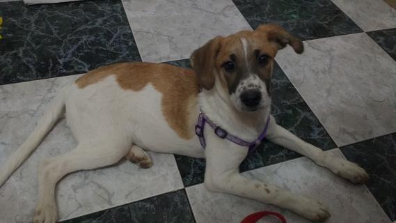 Maxcotea   Foto de Viruta - Perro, Raza: Otro   Maxcotea, Adopción de mascotas. Adopción de perros. Adopción de gatos.