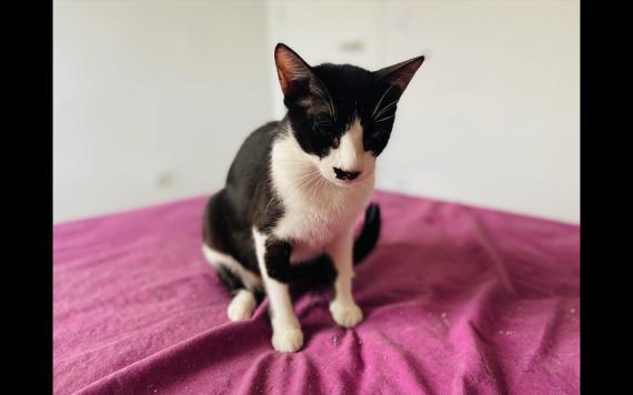 Maxcotea | Foto de Bella - Gato, Raza: Otro | Maxcotea, Adopción de mascotas. Adopción de perros. Adopción de gatos.