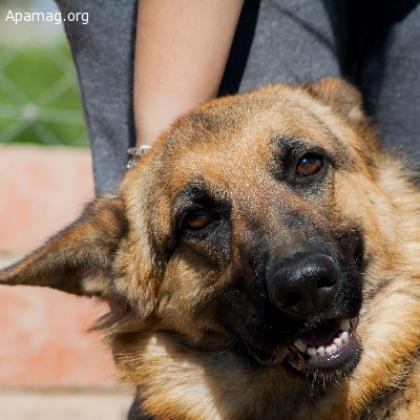 Maxcotea | Foto de Luz - Perro, Raza: Pastor Aleman | Maxcotea, Adopción de mascotas. Adopción de perros. Adopción de gatos.